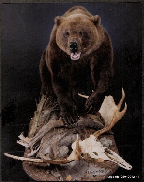 Bear Brown 5
