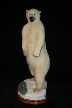Bear Polar 2