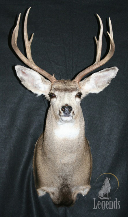 9 - Upright Mule Deer
