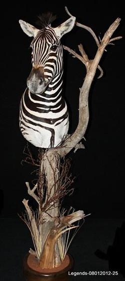 Zebra Pedestal Mount 3