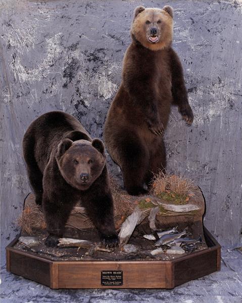 Bear Brown 8