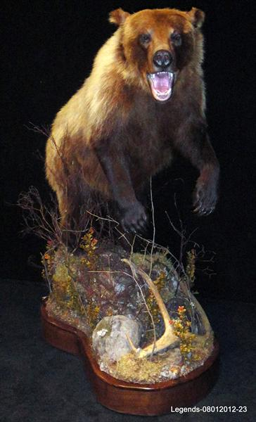 Bear Grizzly 16