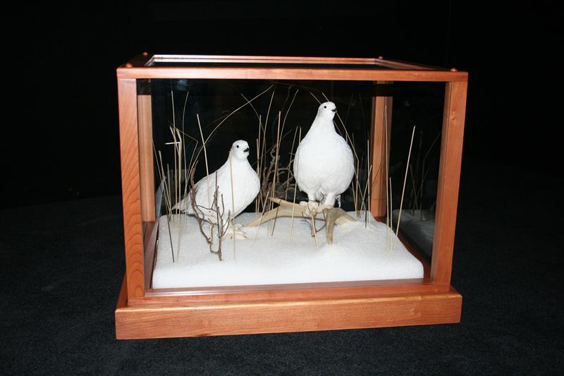 Ptarmigans in Glass Case