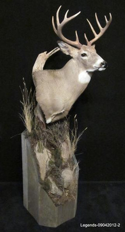 Deer Whitetail Pedestal 2