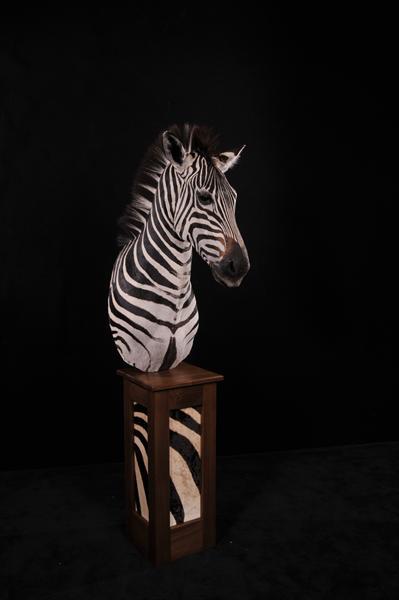 Zebra Pedestal Mount 2