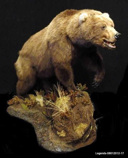 Bear Grizzly 18
