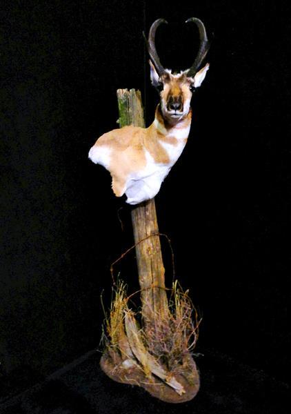 Antelope Pedestal Mt