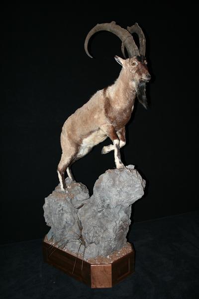 Ibex 1