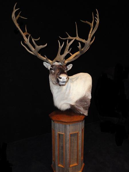 Caribou Pedestal Mount