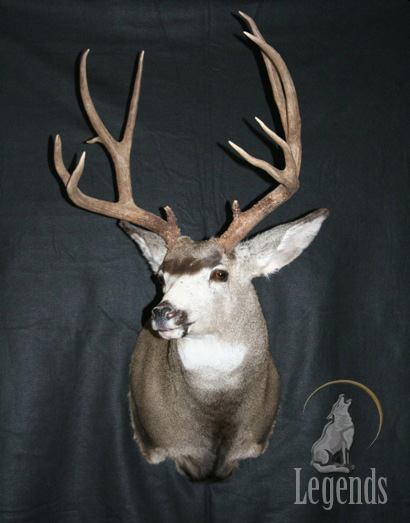 8 - Semi Sneak Mule Deer
