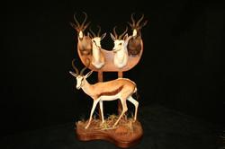 Springboks Group of 5 Types 2