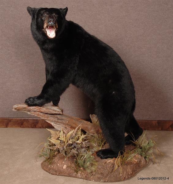 Bear Black LS 3