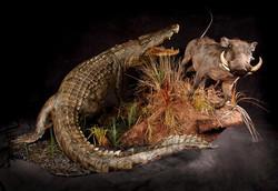 Crocodile and Warthog