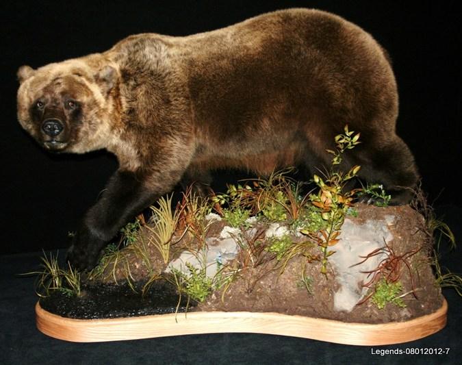Bear Brown 4