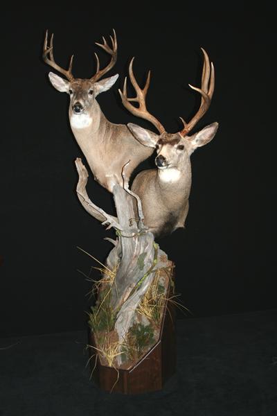 Deer Whitetail and Mule Deer on Open Front Pedestal Base