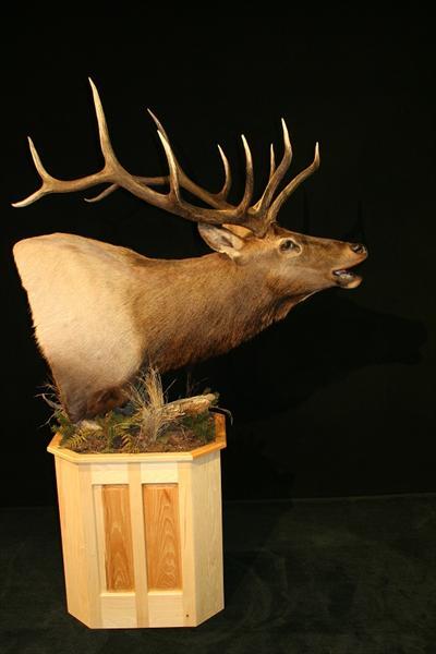 Elk Pedestal Mount 4