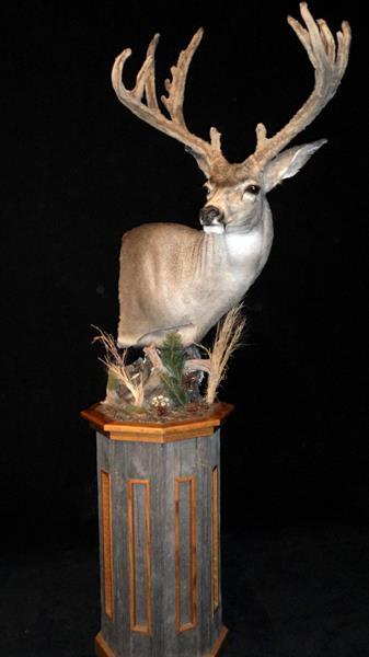 DeerMulePedMt