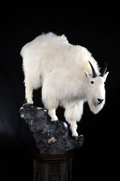 Mt. Goat 2