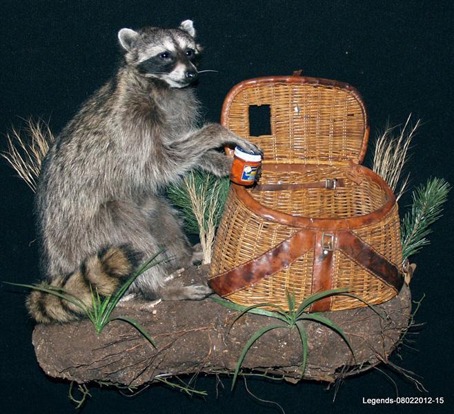 Raccoon LS 1