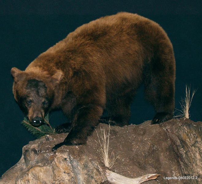 Bear Black LS 2