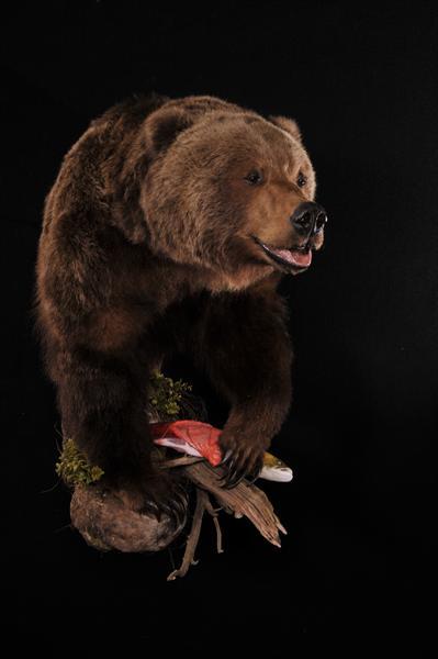 Bear Brown Half Lifesize Mount
