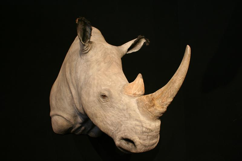 Rhino- White  Shoulder Mount