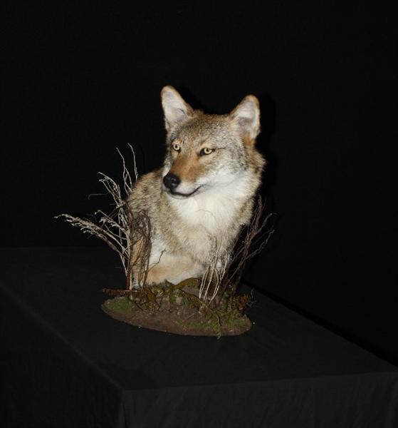 Coyote Pedestal Mount