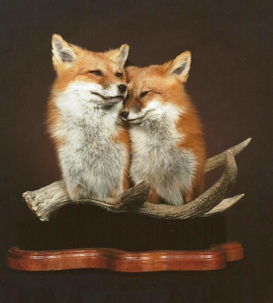 Fox Red Pedestal Mount 001