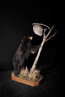 Bear Black 2