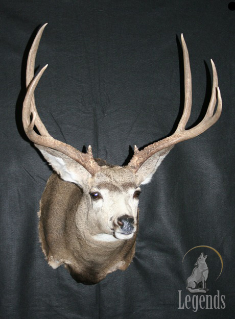 7 - Full Sneak Mule Deer