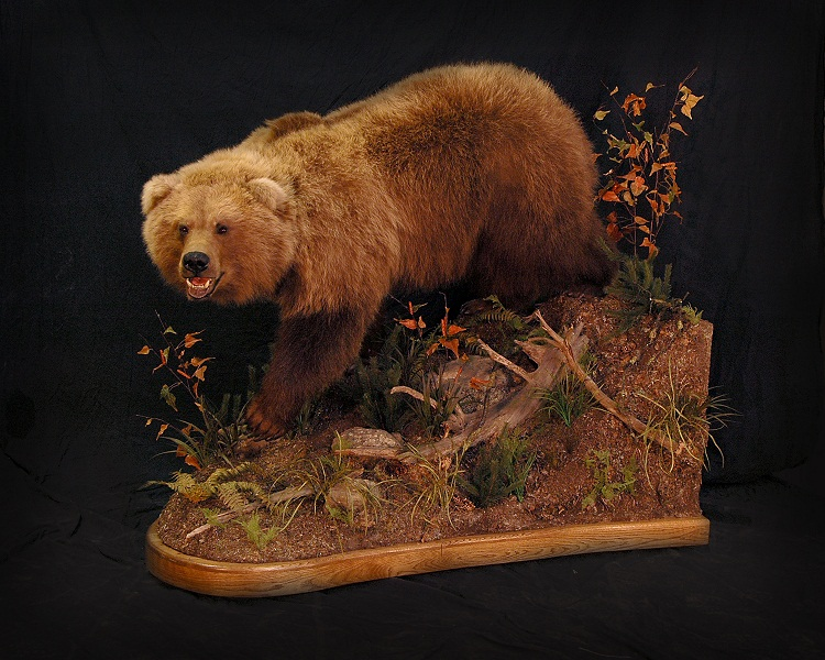 Bear Grizzly 1