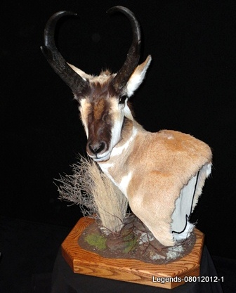 Antelope Table Top
