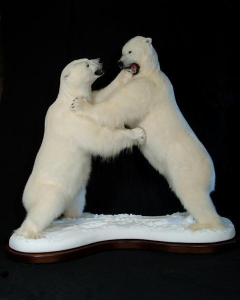Bears Polar