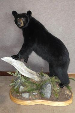 Wendland_x27_s Black Bear 009