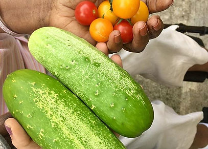 First harvest at the RCC garden! And the