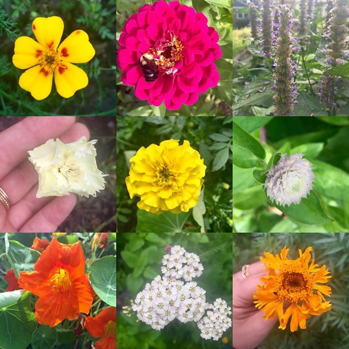 Late summer blooms #marigolds #zinnias #
