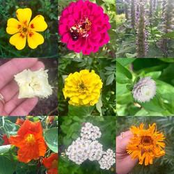 Late summer blooms #marigolds #zinnias #