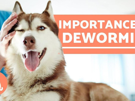 5 THINGS TO KNOW ABOUT DEWORMING YOUR PETS