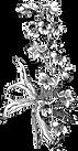 transbg logo