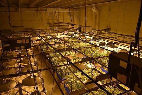 cannabis-4667987_1920.jpg