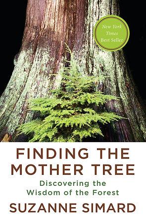 finding mother.jpg