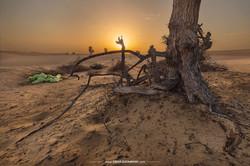 Desert Naked Tree 9657