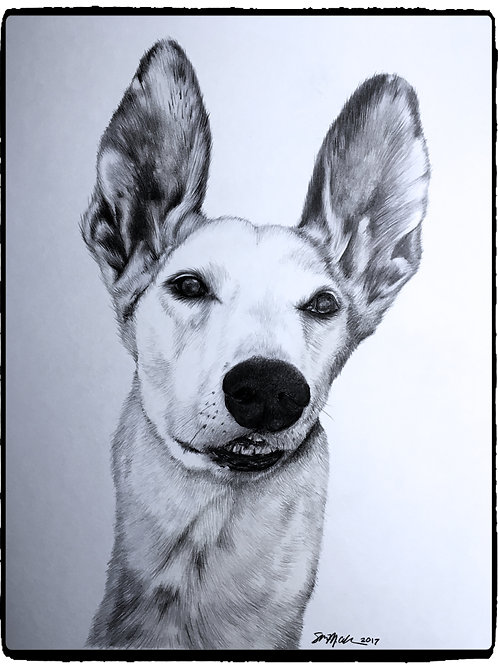 "11"" x 14"" Custom Graphite Pet Portrait"
