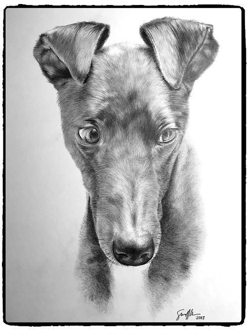 "8"" x 10"" Custom Graphite Pet Portrait"