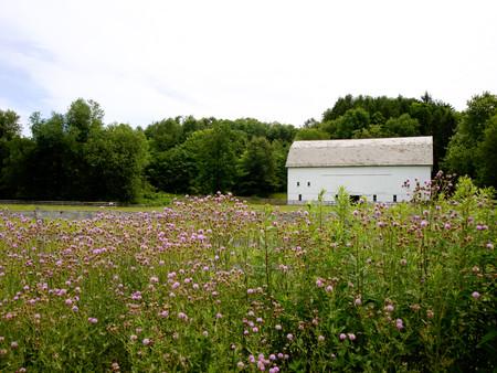 Barn in Field - Streetsboro, OH