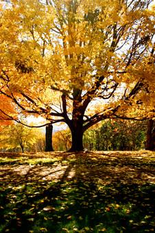 Autumn Fire - Charlottesville, VA