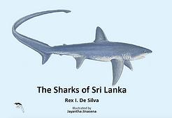 Sharks of Sri Lanka's Amazing Maritime