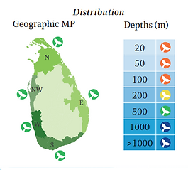 Pilot whale geographical and depth distribution