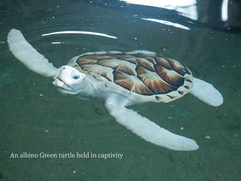 Gentle creatures that walk our lands and swim our seas