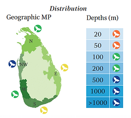 Eden's whale geographical and depth distribution